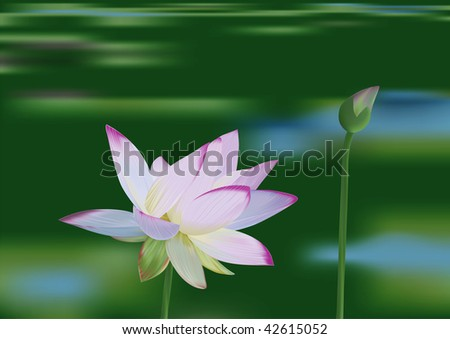 Beautiful water lily on the lake background - vector illustration - stock photo