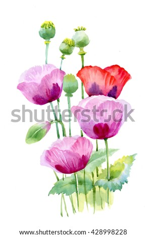 Beautiful watercolor blooming poppy flowers - stock photo