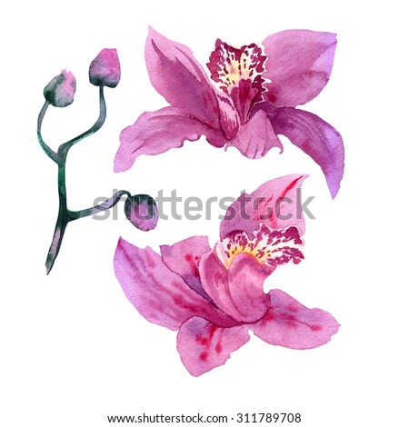 Beautiful watercolor orchids isolated on a white. Pink orchid isolated. Realistic illustration art - stock photo