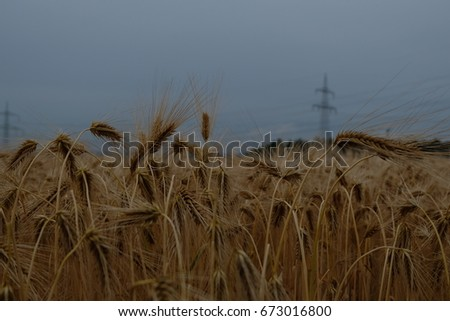 Beautiful wheat field, somewhere in Germany on the way to the airport, Germany
