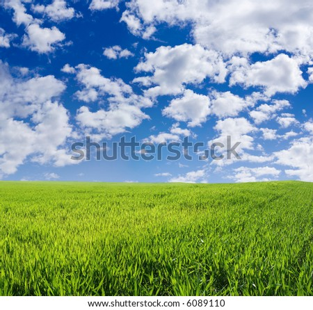 Beautiful wheat field under blue sky - stock photo