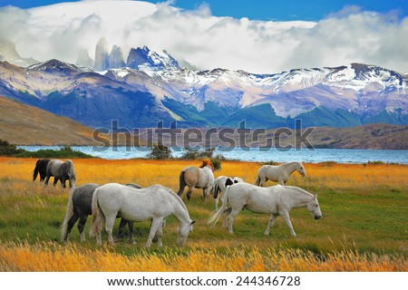 Beautiful white and gray horses grazing in a meadow near the lake. On the horizon, towering cliffs Torres del Paine - stock photo