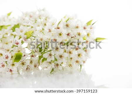 Beautiful White Apple Blossoms on Solid Background