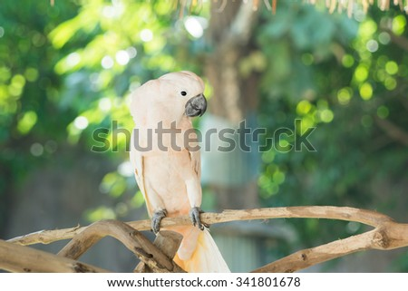 beautiful white bird on the branch with green background - stock photo