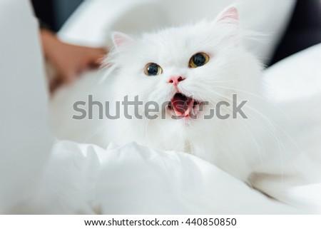 Beautiful white cat lying on bed - stock photo