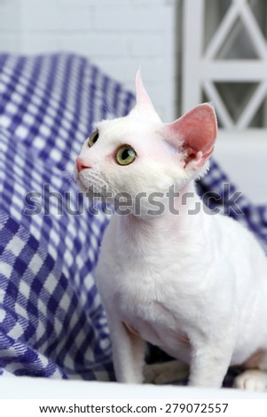 Beautiful white cat on plaid