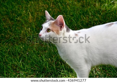Beautiful white cat playing outdoors