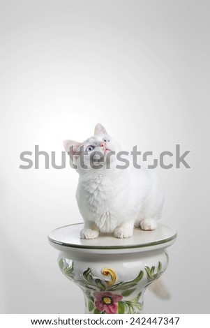 Beautiful white cat staring at the camera