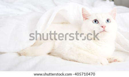 Beautiful White Cat with Blue Eyes Relaxing on Belgian Linen Sheets - stock photo