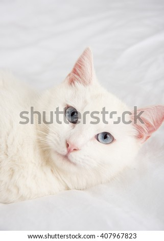 Beautiful White Cat with Blue Eyes Relaxing on Belgian Linen Sheets