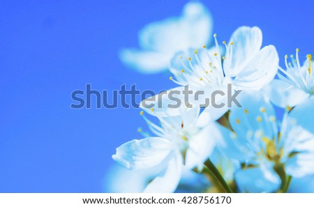 Beautiful white flowers against blue clear sky. Shallow depth of field - stock photo