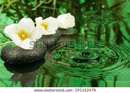 Beautiful white flowers among the black stones  in the rain, as background - stock photo