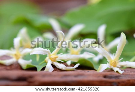 Beautiful white flowers in spring