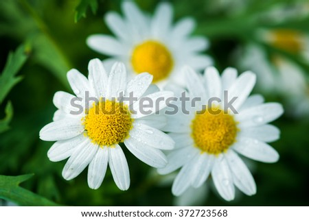 Beautiful white flowers on green background