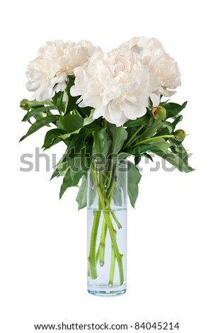 Beautiful white flowers peonies in a vase, isolated on white background