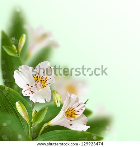 Beautiful white flowers with bokeh. Floral background.