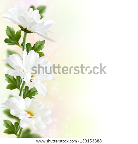 Beautiful white flowers with bokeh. Floral border.
