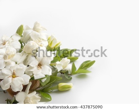 gardenia flowers stock images, royaltyfree images  vectors, Natural flower
