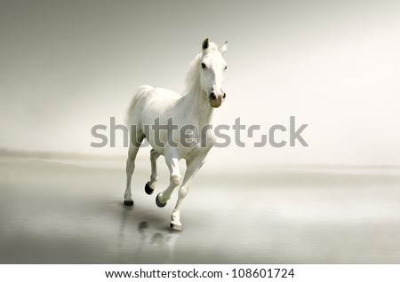 Beautiful white horse in motion - stock photo
