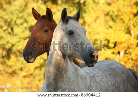 Beautiful white horse portrait in autumn