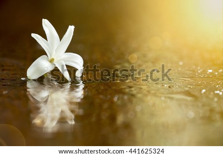 Beautiful white hyacinth flower relax spa background with copy space - stock photo