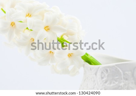 beautiful white hyacinth for background