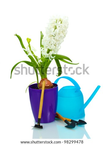 beautiful white hyacinth in purple flowerpot, watering can and garden tools isolated on white
