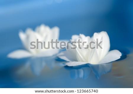 Beautiful White Jasmine Flowers Floating on Blue Water - stock photo