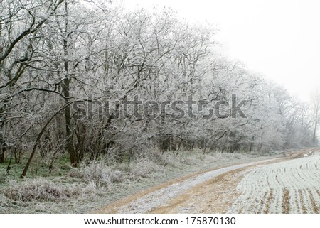 Beautiful white landscape in winter in the pasture