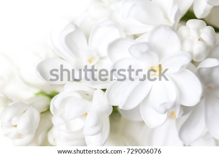 Beautiful white lilac flowers floral wallpaper stock photo 729006076 beautiful white lilac flowers floral wallpaper mightylinksfo