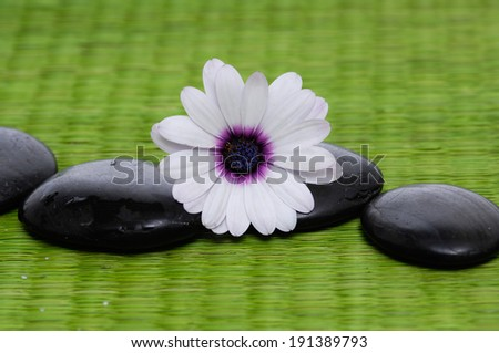 Beautiful white orchid and zen Stones on green mat