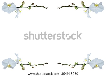 Beautiful White Orchid Flower Frame Isolated Stock Photo & Image ...
