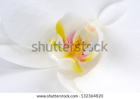 Beautiful White Orchid Flower Macro - stock photo