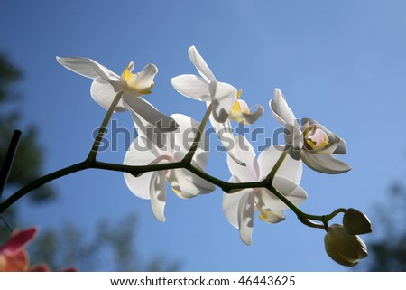 Beautiful white orchid flowers cluster