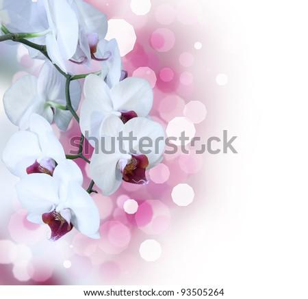Beautiful white orchid isolated on white background - stock photo