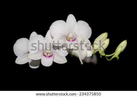 Beautiful White orchid on a black background - stock photo