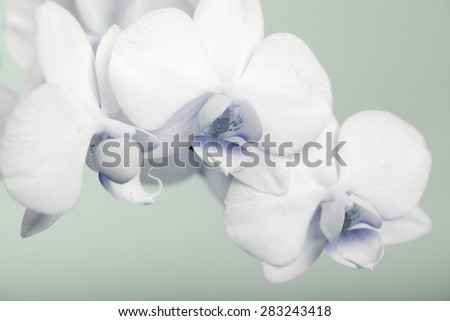 Beautiful white orchid on a blue background - stock photo
