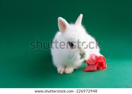 Beautiful white rabbit with pink rose on green background