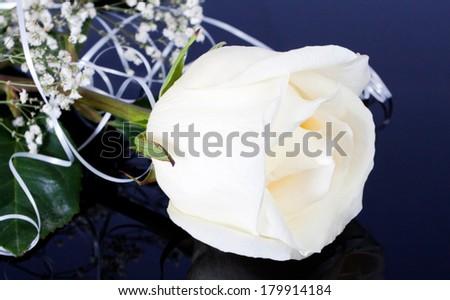 Beautiful white rose on a black background - stock photo