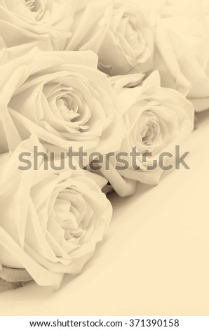 Beautiful white roses closeup can use as wedding background. Soft focus. In Sepia toned. Retro style