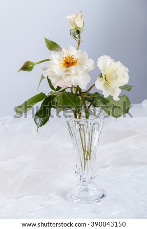 Beautiful white roses in glass vase - stock photo