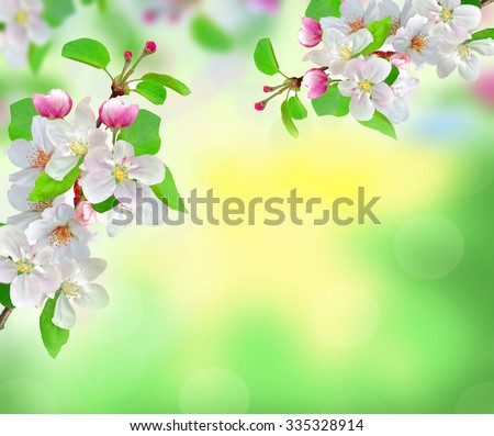 beautiful white spring blossom on blurred nature background - stock photo