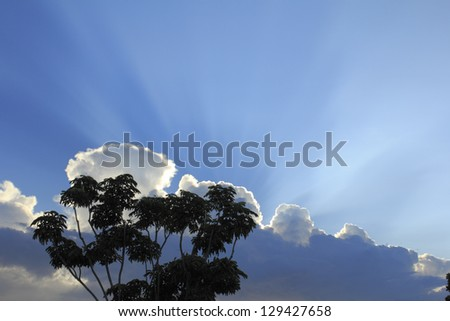 Beautiful white sunlight shining upwards behind an expanse of clouds in a blue sky with a tall, tropical schefflera tree outdoors on a summer evening in Fort Lauderdale, Florida. - stock photo