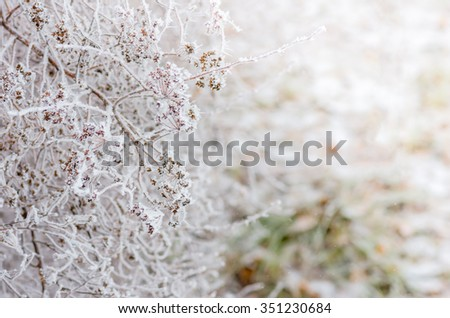 Beautiful white winter frost on the trees and bushes
