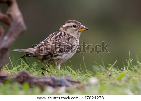 Beautiful wild bird perched on a branch in nature - stock photo