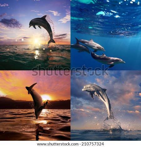beautiful wild dolphins set - stock photo