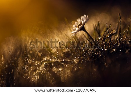 Beautiful wild flower in the forest after rain and sunset. View my gallery for more beautiful nature photos. - stock photo