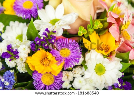 Beautiful Wild flowers background  on a white background