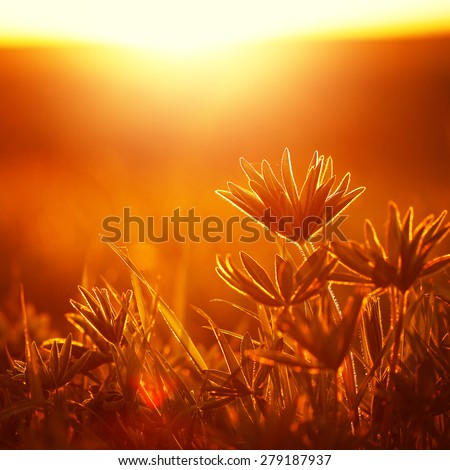beautiful wild flowers in field at sunrise. Sunny nature photo