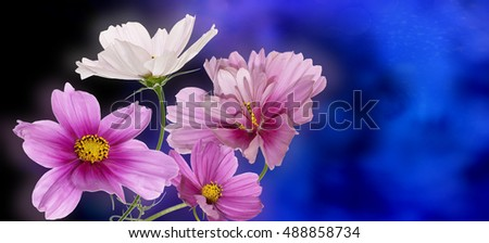 Beautiful wild flowers on abstract  cyan dark background